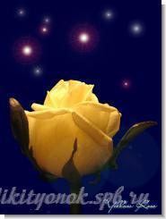 yellow_rose.jpg (65.3 Kb)